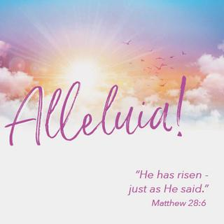Matthew 28 v 6 Easter Greetings Card